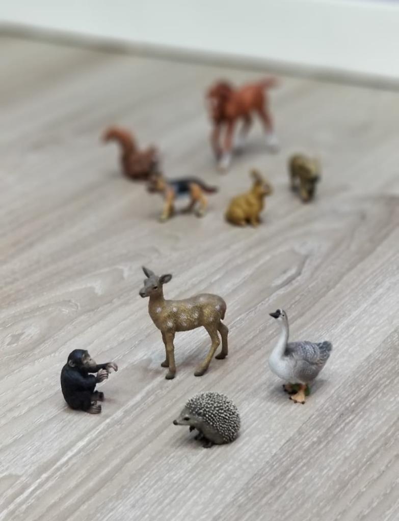 动物说故事